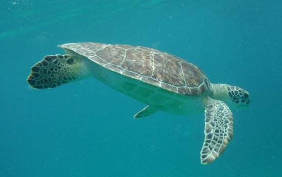 Robinson Speed Boat Tours: We say sea turtles!