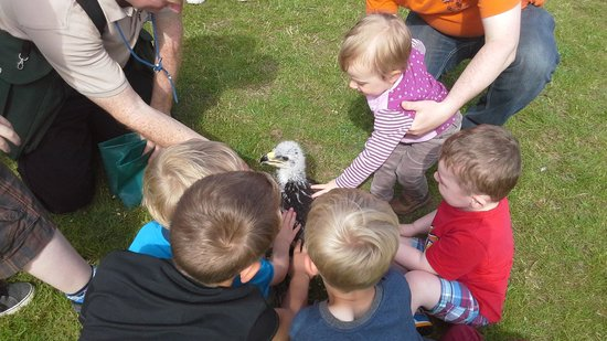 York Bird of Prey Centre: great for kids no matter what age