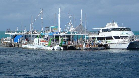 Cruise Whitsundays: Reefworld..bit choppy.