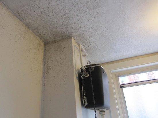 The Londonears Hostel : Schimmel an der Decke