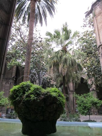 Catedral de Barcelona: Courtyard and water feature, Cathedral of Saint Eulalia