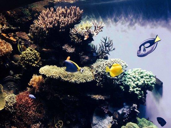 Monterey Bay Aquarium : Fauna e flora marinha da Califórnia mostradas com muita dedicação.