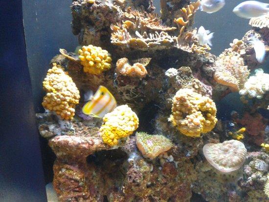 Palma Aquarium: aquarium