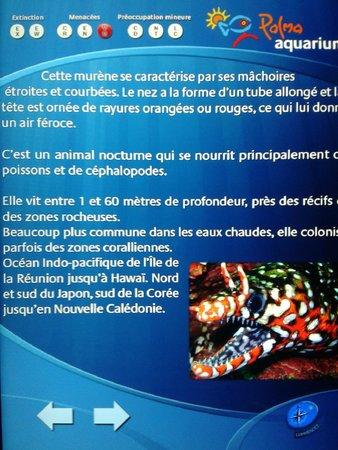 Palma Aquarium: explication