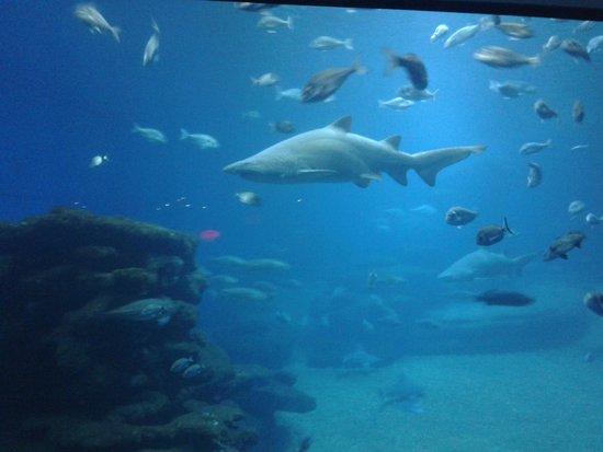 Palma Aquarium : aquarium