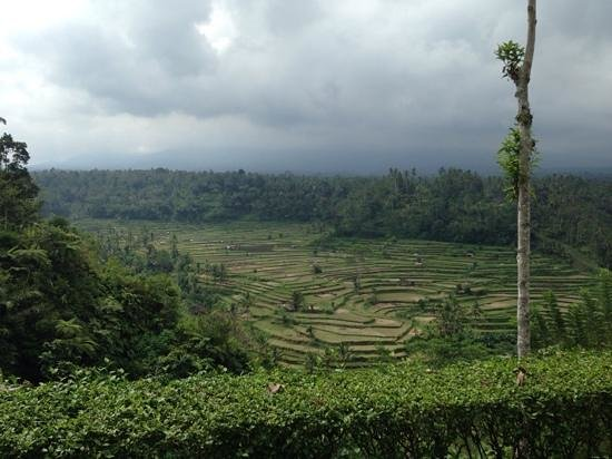 The Mahagiri: the rice terrace view from the restuarant.