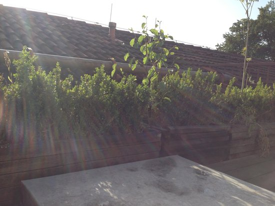 Yachthotel Chiemsee: Die ungepflegte Balkonbepflanzung
