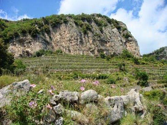 Sentiero degli dei (Path of the Gods): Vigne