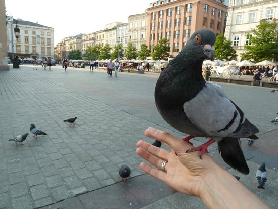 Main Market Square: The Pigeons come to eat out of your hand :-)