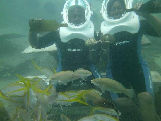 Sea Trek on De Palm Island