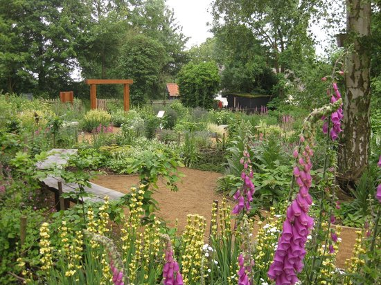 RSPB Flatford Wildlife garden in full bloom