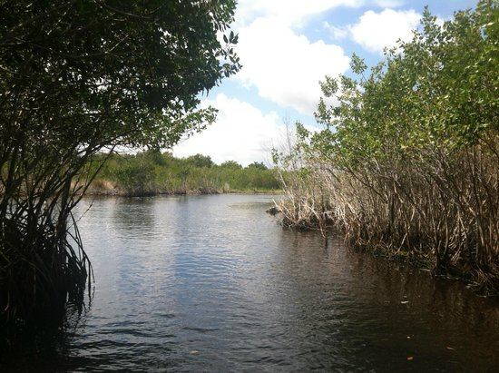 Speedy's Airboat Tours: Coming out of mangrove trees.