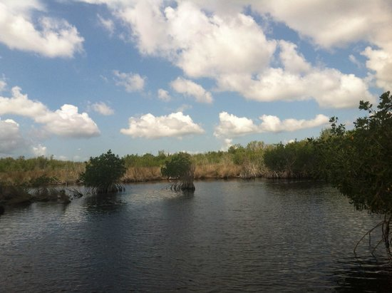 Speedy's Airboat Tours : Beautiful!