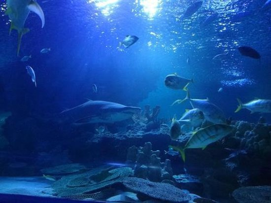 Aquaria KLCC: shark