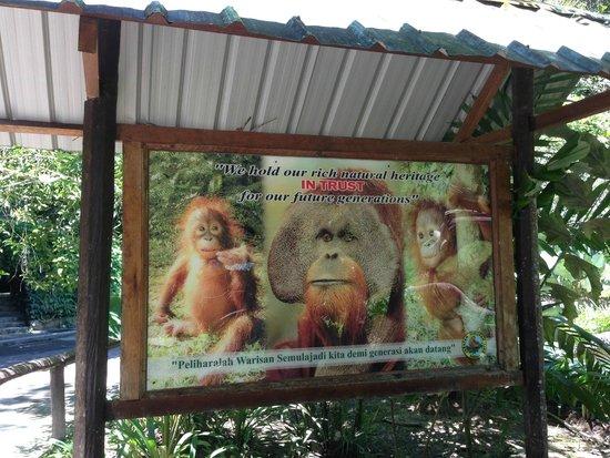 Le Meridien Kota Kinabalu: オラウータン見に行ったのに寝ていて出てこなかったので写真だけ