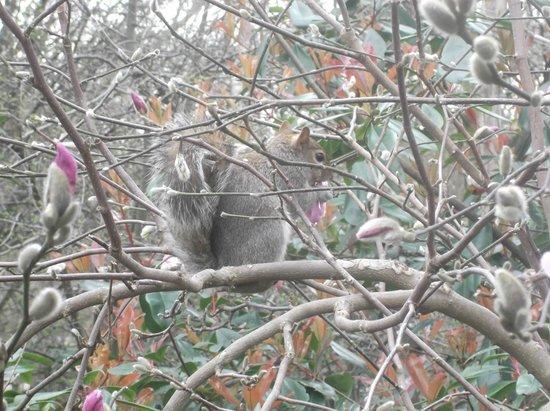 Ecureuil à Hyde Park