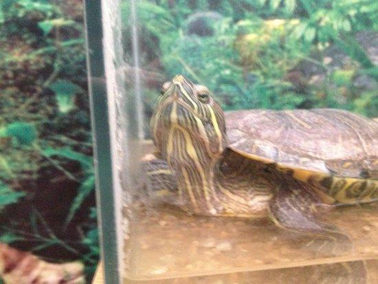 Insectopia : Turtle!