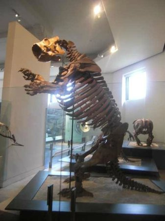 American Museum of Natural History: The cave bear