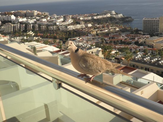 Royal Sun Resort : Our little visitor!