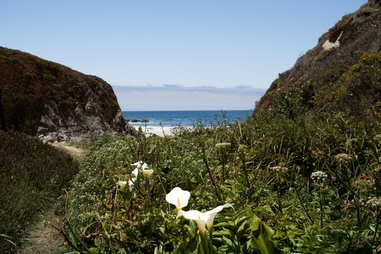 Garrapata State Park : Calla Lilies Nearly Gone in June