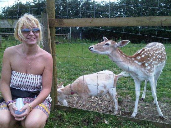 Farmtastic Animal Farm: deer and goats