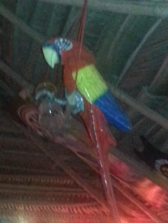 The Pickled Parrot hanging in the middle of bar