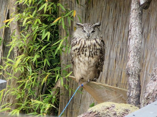 Bergbahn Königstuhl: Bird attraction at the top (fee)
