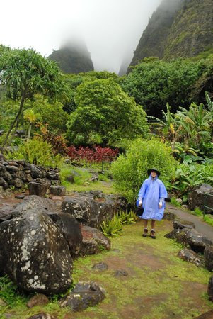 Iao Valley State Monument: Beautiful Indigenous Plants