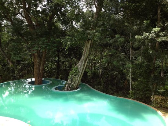The Windflower Resort and Spa, Coorg: swimming Pool