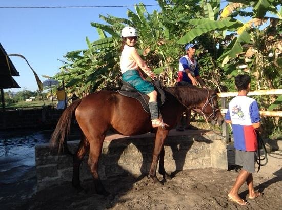 Bali Island Adventure Tours : Horse Riding
