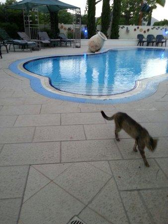 Arbel Guest House Shavit Family: The pool