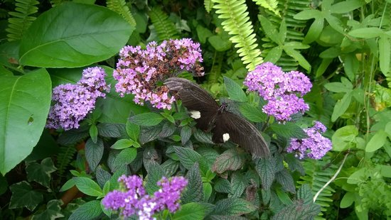 Straffan, Ierland: One of the butterflies at the farm.