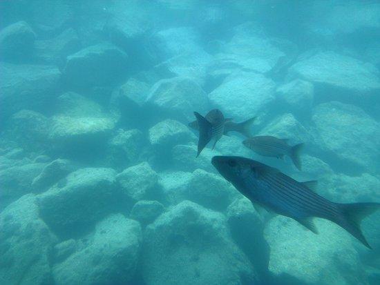 Aventura submarina: Fish from the window