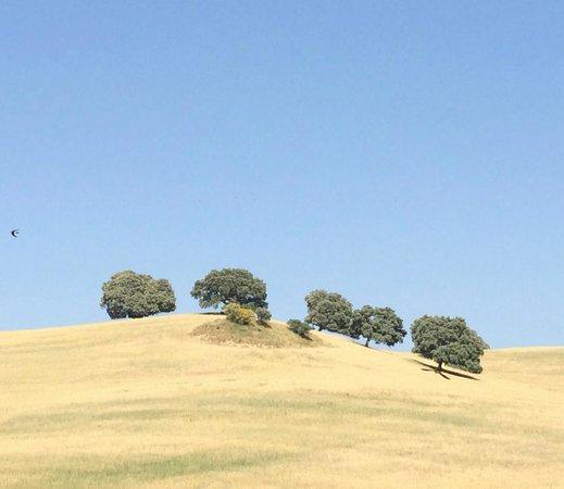 Cortijo de Las Piletas: Iconic oaks