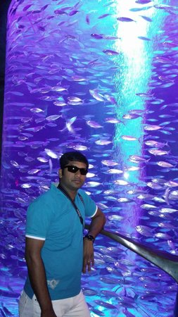 Atlantis, The Palm: @ Lost Chamber