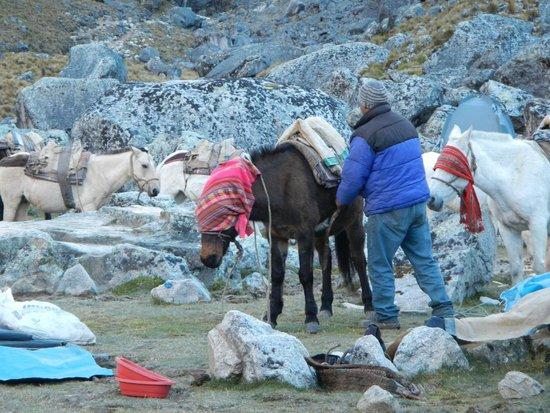 Munaycha : Horses getting set for the days journey