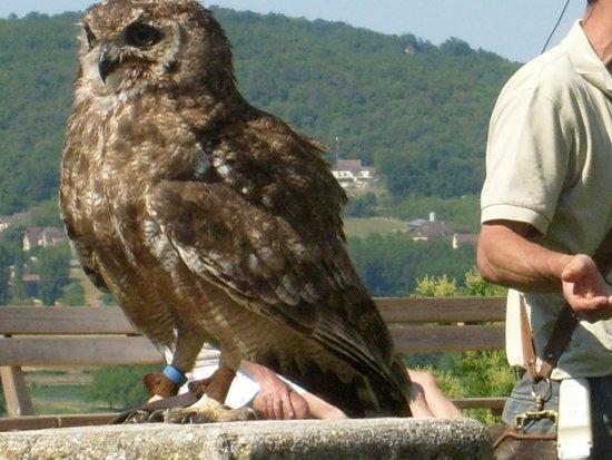 Chateau des Milandes: le spectacle de faucons