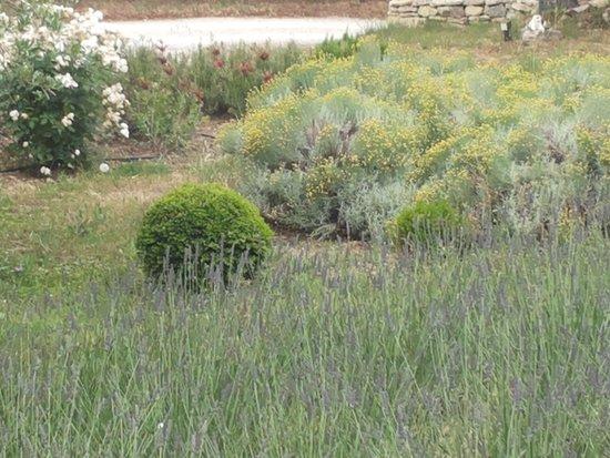 Mas Galinelle : giardino