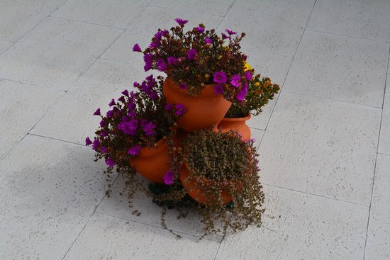 Hotel Nova Sintra: Flowers on terrace