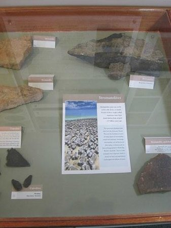 Display in the Orkney Fossil and Heritage Centre