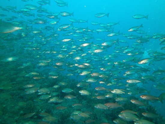 Olympus Dive Center: Passing through a school of fish