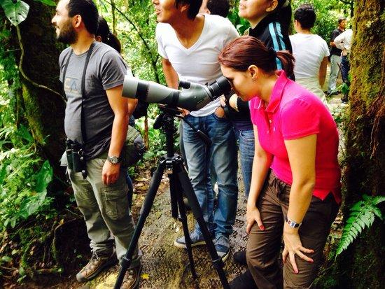 Selvatura Park: Observando el Quetzal