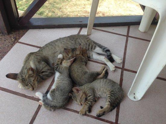 Casa Museo Isleña  : Gatitos en la tienda