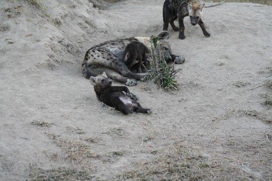Tanda Tula Safari Camp: mom and some pups