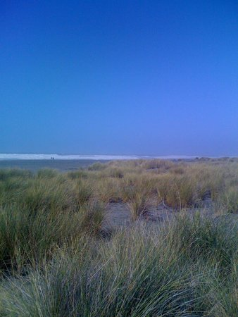 Gold Bluffs Beach Campground: The fog usually burns off by 1:00