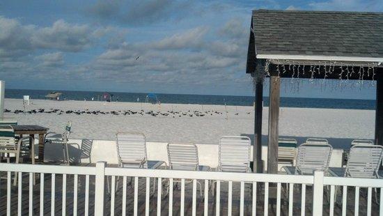 Bon Aire Resort: Beach day