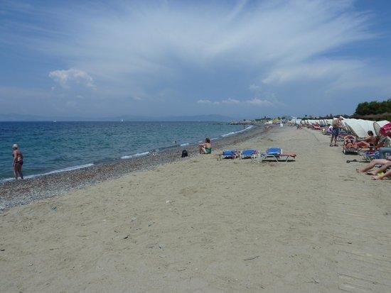 Kipriotis Hippocrates: la plage