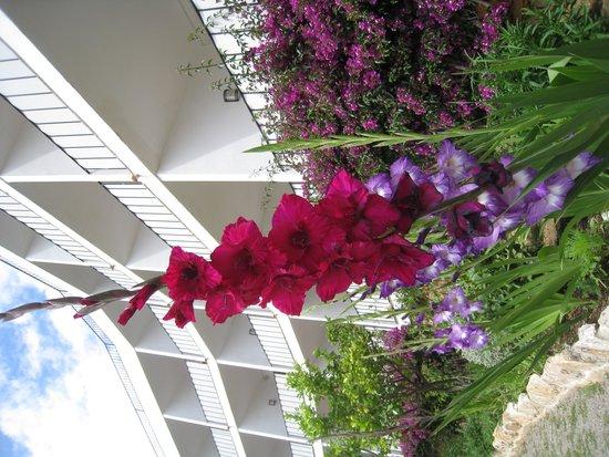 Hotel Eetu: very well kept garden and flowers
