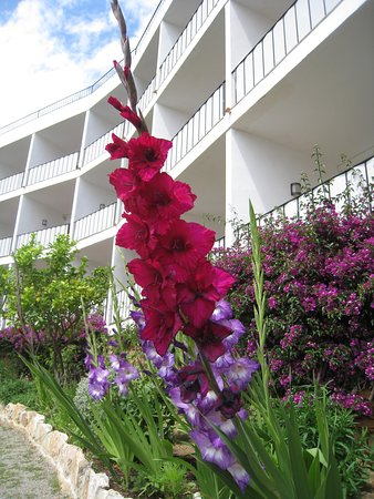 Hotel Eetu: very well kept garden and flowers