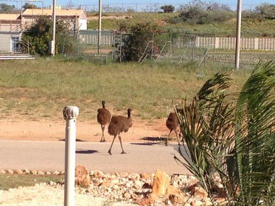 Sea Breeze Resort : Emu's